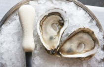 5 Places with Great Oysters in NYC